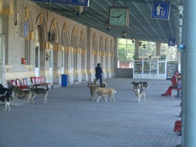 Otra con perros: En Gara de Est