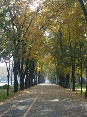 El otoño en Bucarest